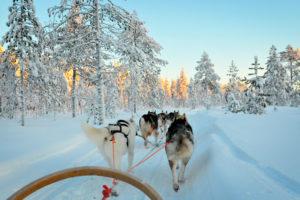 Sled dogs POV
